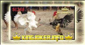 Bandar S1288 Taruhan Laga Ayam Terbesar Indonesia, Saat Ini!