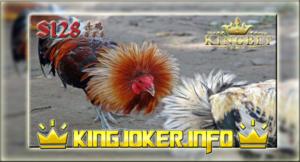 Lokasi Arena S128 Sabung Ayam Tarung Terbesar Uang Asli!