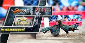 LiveChat Sabung Ayam S128 Online Resmi Indonesia Terpercaya