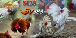 Agen S128 Ayam