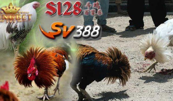 Daftar Sabung Ayam