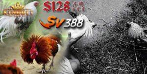 Live S128 Terbaik