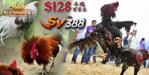 Game Sv388